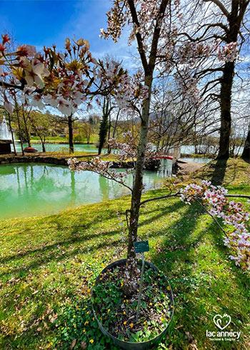 Lac-de-la-Balme-de-Sillingy-©-Lac-Annecy-Tourisme---Chloé-GAONA-350-490